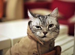 Температура опустится до 11 градусов в Краснодарском крае