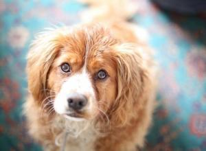Зоозащитники в Краснодаре попросят остановить уничтожение собак к ЧМ-2018