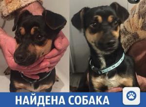 Милый щенок ищет старых или новых хозяев в Краснодаре
