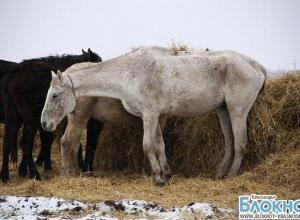 Табун лошадей на протяжении двух лет «гуляет» по Шабановке