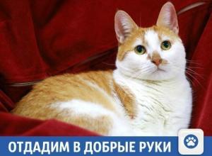 Отдадим умную кошку Асю в Краснодаре