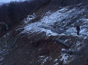В «Сочинском национальном парке» неизвестные срубили 45 деревьев