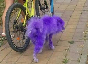 «Моя собственность - что хочу, то и делаю!» - краснодарка о фиолетовой собаке