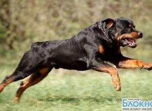 В Кропоткине собака напала на ребенка