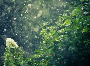 В выходные в крае ожидается одновременно и дождь и жара