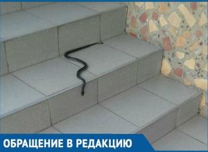 Змея на пороге медучреждения напугала краснодарцев