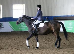 Лошадей на мясо, землю под застройку: В Курганинске собираются закрыть конно-спортивную школу
