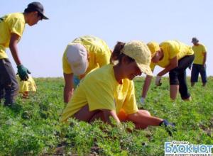 Краснодарских школьников трудоустроят на время летних каникул