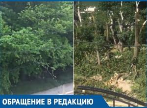 Житель Мысхако на видео показал, как уничтожают лес Черноморского побережья