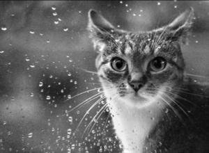 На Кубани в среду пройдут кратковременные дожди
