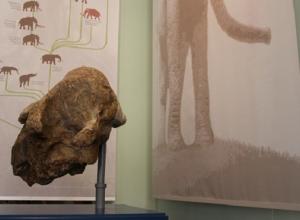 В Краснодаре представили три впечатляющих геологических находки
