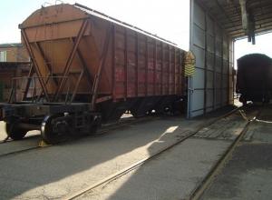 Почти 70 тысяч тонн кубанского зерна заражено семенами амброзии
