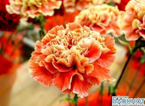 В аэпорту Краснодара сожгли партию цветов гвоздики