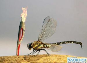 В Сочи представят самую маленькую копию олимпийского факела