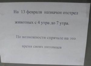 По 1570 рублей будут давать за голову бродячего животного в Краснодарском крае