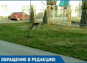 Избавьте нас от этой собаки: Жительница Краснодара пожаловалась на страшного бездомного пса