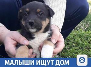Малыши ищут дом в Краснодарском крае