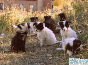 За безнадзорными животными Брюховецкого района начали следить