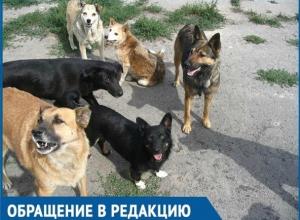 «Бездомные собаки стаями бегают около детсадов и школ!» - жительница Краснодара