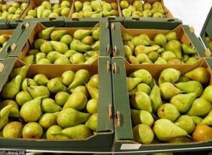 Почти 200 кг санкционных груш ликвидировали под Краснодаром
