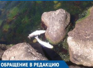 Жителей Тамани встревожила массовая гибель рыбы