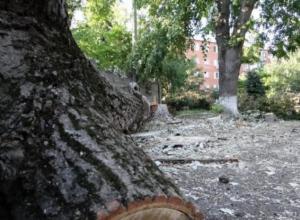 Во дворе краснодарской гимназии снесли аллею ради установки забора