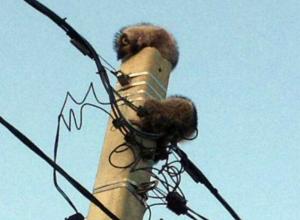 В Новороссийске развернули спецоперацию по спасению двух енотов