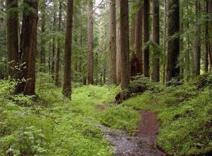 В туапсинском лесу нашли повешенного солдата-срочника