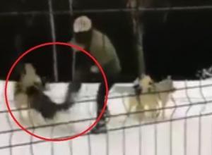 Прокуратура проверит инцидент с избиением собак хаски в Сочи