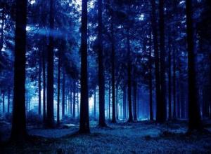Сочинские спасатели ночью несколько часов искали в лесу потерявшуюся туристку