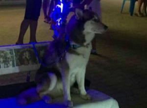 Фотографы измучили собак-моделей в 30-градусную жару в Джубге