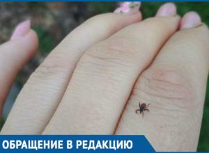 Женщина поймала клеща в Ботаническом саду Краснодара
