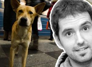 «Моих собак убили из-за мундиаля»: Новую скандальную статью написал испанский журналист Паскуаль