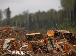 «Дровосеки» в Краснодарском крае нарубили деревьев на 117 млн рублей
