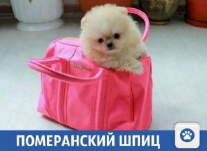 «Строительство, одежда, животные, образование»: Свежие частные объявления на «Блокнот Краснодар»