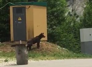 Молодой медведь в Сочи напугал туристов
