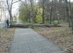 В Чистяковской роще Краснодара на тротуар упало дерево