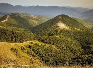 Экологи: Новороссийский лес исчезнет через 20 лет