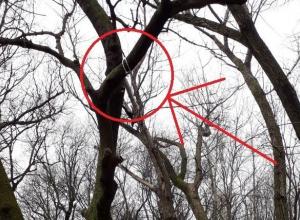Жителей Новороссийска возмутила петля на дереве возле детской площадки