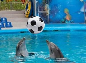 В Сочи дельфины за 100 дней до ЧМ-2018 сыграют в футбол