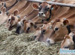 Кубань на третьем месте по производству мяса