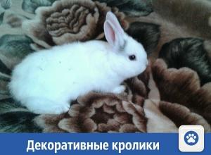 Декоративные кролики ищут новых хозяев
