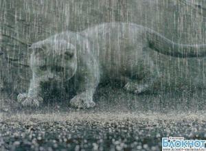 В Краснодарском крае 12 сентября ожидаются дожди и грозы