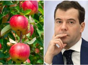 «Кузен» Дмитрия Медведева купил агрофирму в Краснодаре
