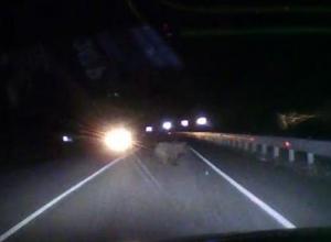 Медвежонок на трассе в Сочи едва не стал причиной ДТП