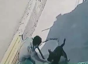 Собака покусала женщину до крови в Новороссийске