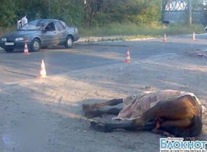 В Северском районе иномарка сбила лошадь