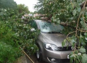 Что делать краснодарцу, если на его машину упало дерево