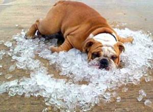 Экстренное предупреждение: кубанцев ждет сильная жара