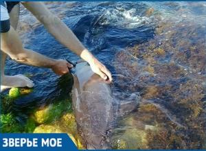 Горячую линию для спасения дельфинов открыли в Краснодарском крае